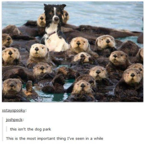 Amusing Tumblr Posts about Animals That Will Have You in Fits of Laughter
