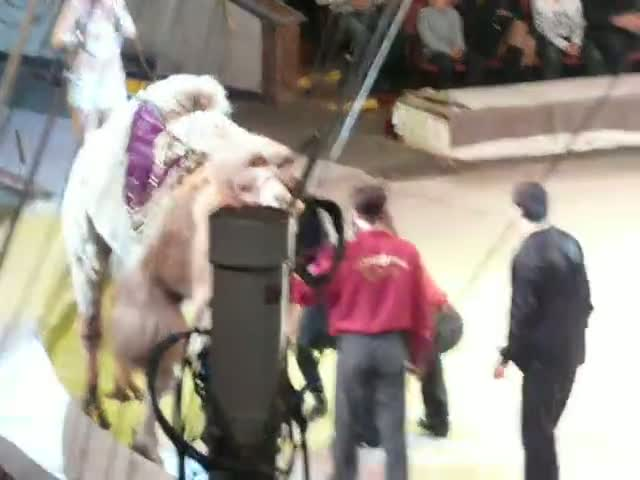 Circus Performer Gives the Audience and Impromptu Performance That Is Hilarious