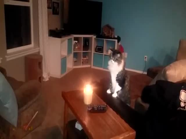 Cats Learn the Hard Way That You Should Never Play with Candles
