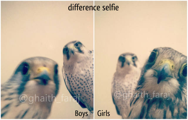 difference selfie