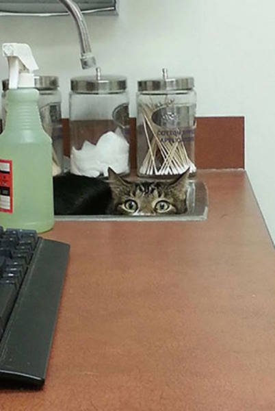These Pets Definitely Don't Want to Be Visiting the Vet