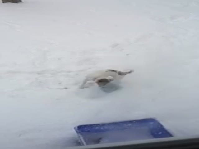 Dog Uses a Frisbee to Shovel Snow and It's the Cutest Thing Ever