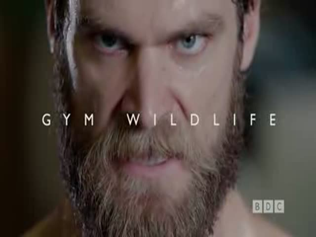 A Hilarious Parody Video of the Kinds of People That Go to Gyms