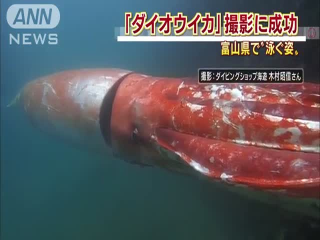 You Will Probably Never See a Squid Bigger Than This