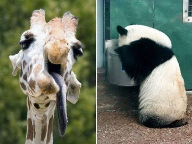 Animals Who Look Like They Had a Rough Night
