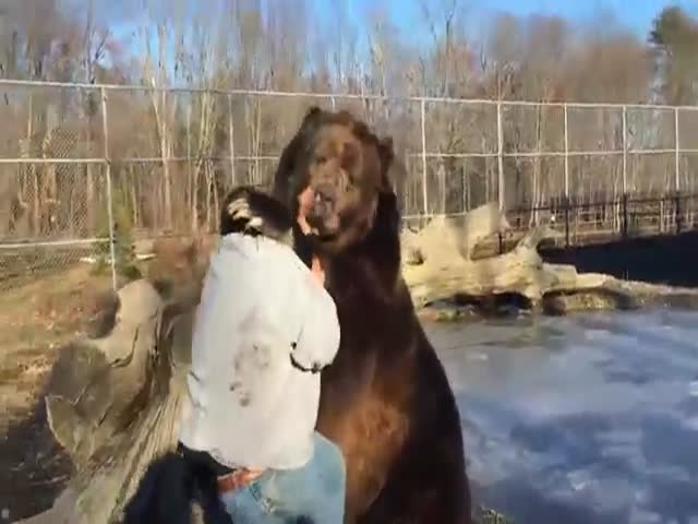 This Is One Really Friendly Bear