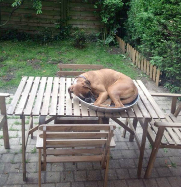 Dogs Can Sleep Anywhere and Everywhere