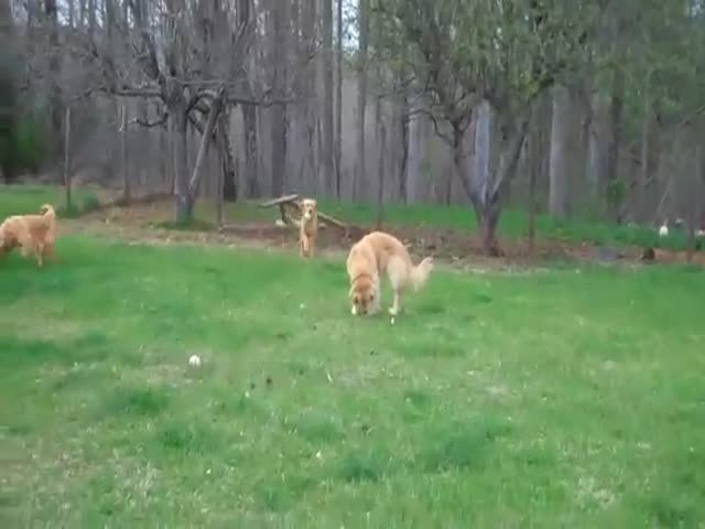"""This Has to be the Most Excited Anyone Has Ever Gotten over a Game of """"Fetch"""""""