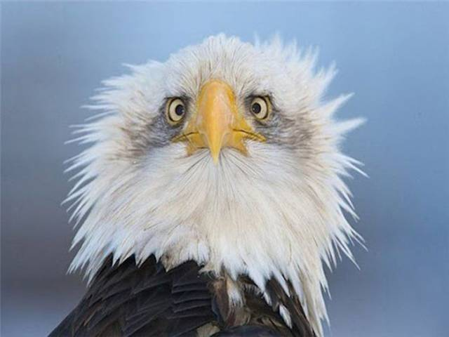 This Is the Real Reason You Only Ever See Side Profile Photos of Eagles