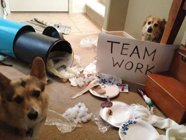 Animal Teams Who Work Together to Wreck Havoc around Them