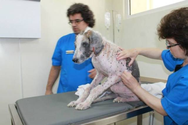 Sick and Defeated Street Dog Makes a Miraculous Recovery