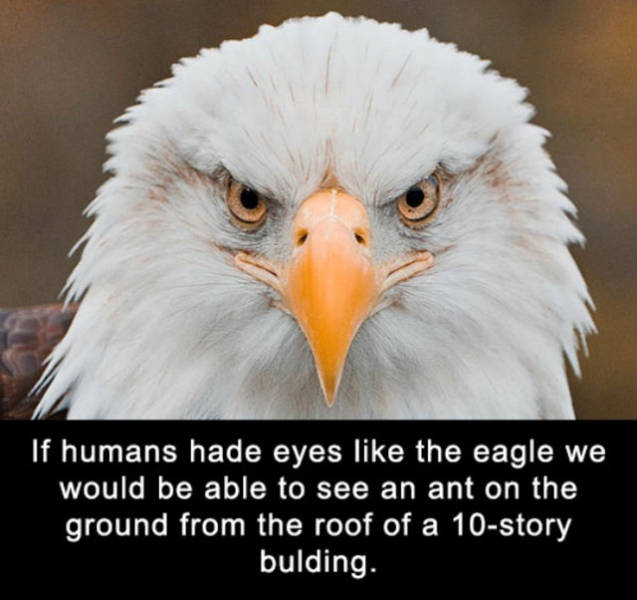Some Amazingly Interesting Facts about Eyes