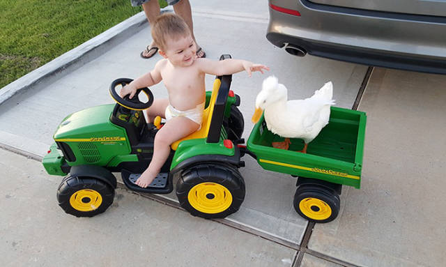 The Little Boy Is Best Friends with His Duck Who Follows Him Everywhere