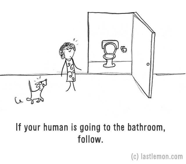 "Artists Create an Amusing and Simple Guide on ""How to be a Dog"""
