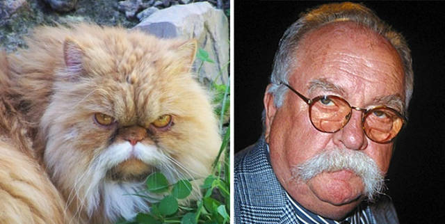 Celebs and Their Strikingly Similar Animal Doppelgangers