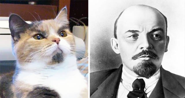 Celebs and Their Strikingly Similar Animal Doppelgangers
