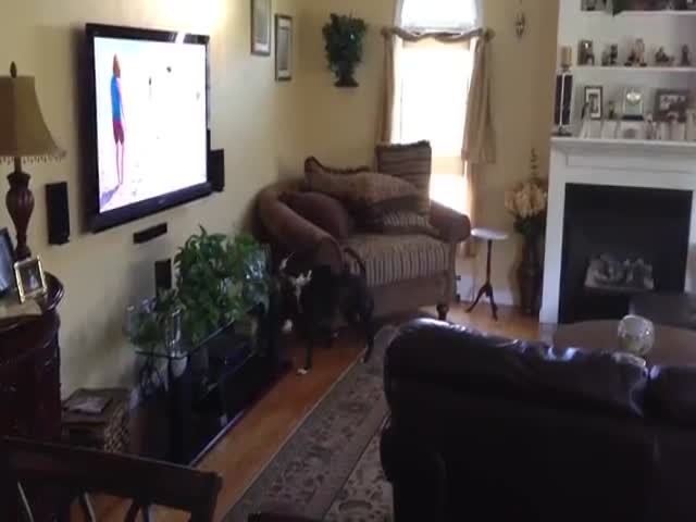 Dog's Happy Dance Is Adorable When It's Watching Other Dogs On TV
