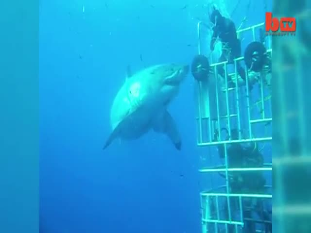 Unseen Footage Of The World's Biggest Great White Shark