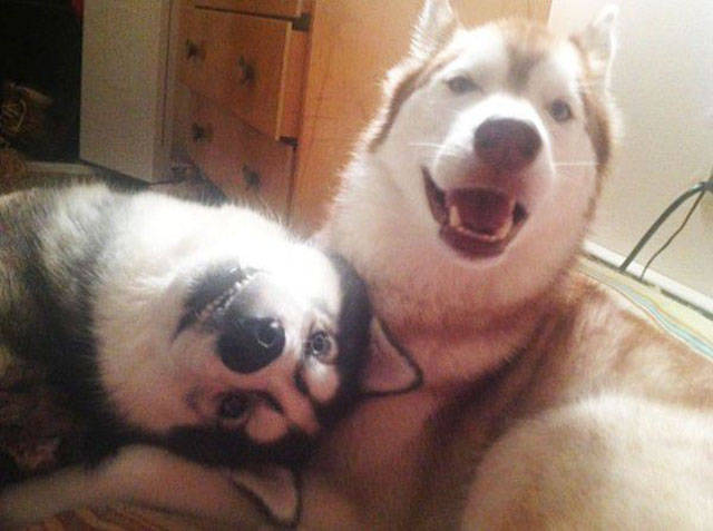 Doggies Who Are Friends Are Too Cute Not To Smile