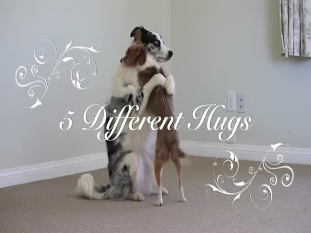 5 Types Of Hugs For Valentine's Day Performed By Dogs