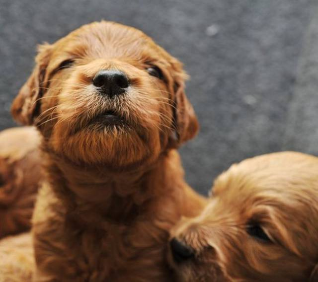 These Pups Are So Adorable That There Is No Word For It