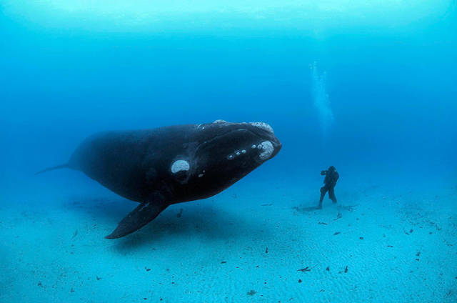 Beautiful Whale Photography