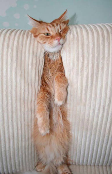 Animals That Are Stuck And The Only Question Is How?!