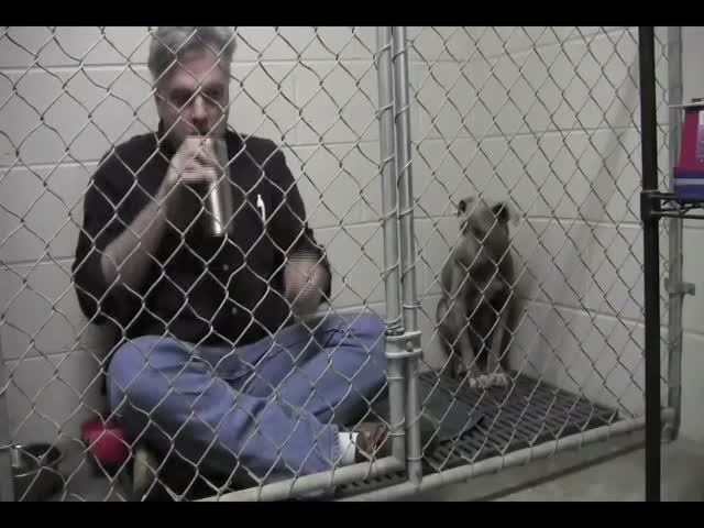 Awesome Vet Goes To A Cage With A Dog To Make Her Comfortable