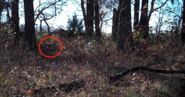 Can You Spot A Camouflaged Marine In These Photos?