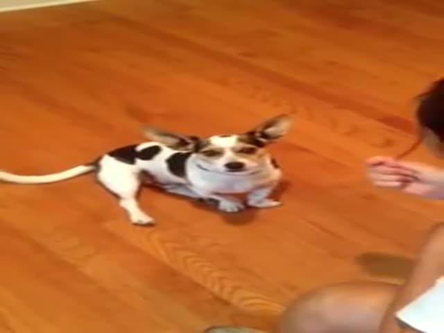 Dog Learns How To Meow