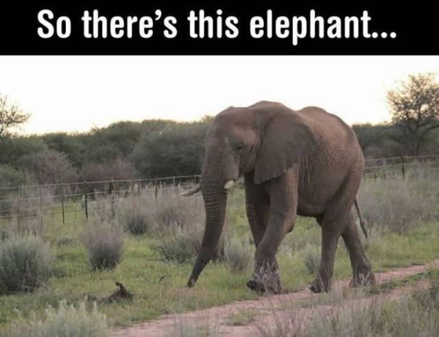 This Is One Good-Mannered Elephant