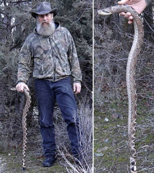 You Think It Is A Real Snake? Take A Closer Look