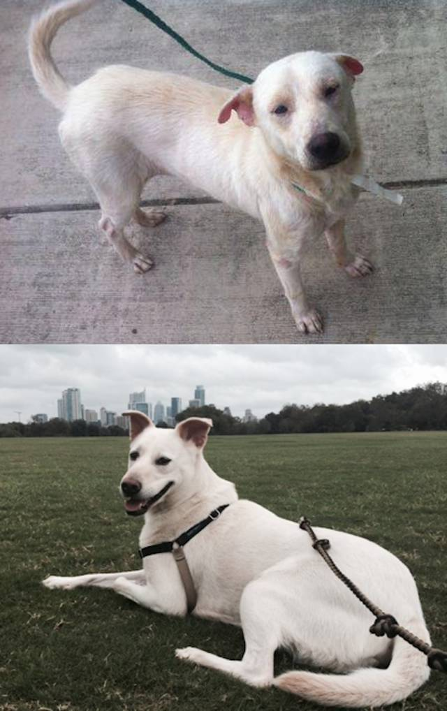 Transformations Of Animals After They Were Adopted