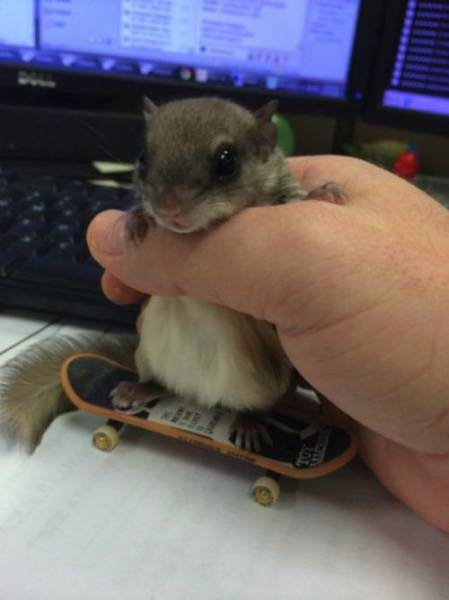 Man Rescues A Tiny Newborn Squirrel Who Becomes His Pampered Pet