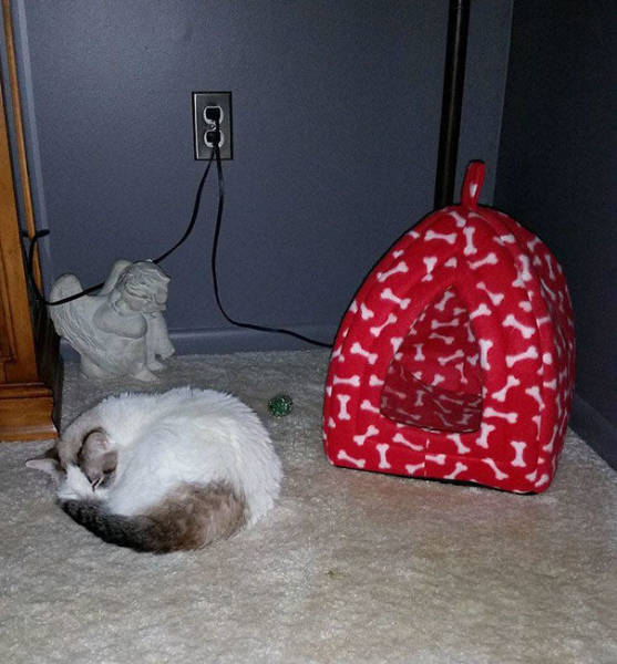 Reasons Why It Is Useless to Buy Any Gifts For Cats