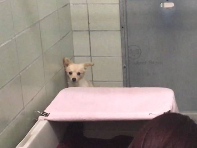 Shelter Staff Found How To Get Through To A Scared Dog