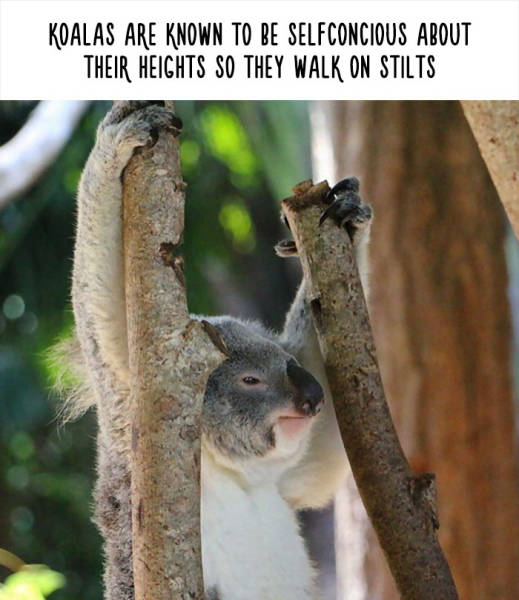 Funny Facts About Animals That Will Open Your Eyes