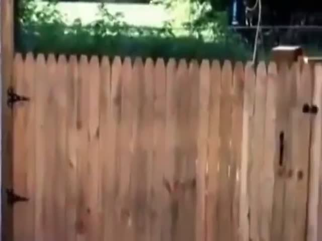 Man Builds A Fence So His Dog Wouldn't Escape