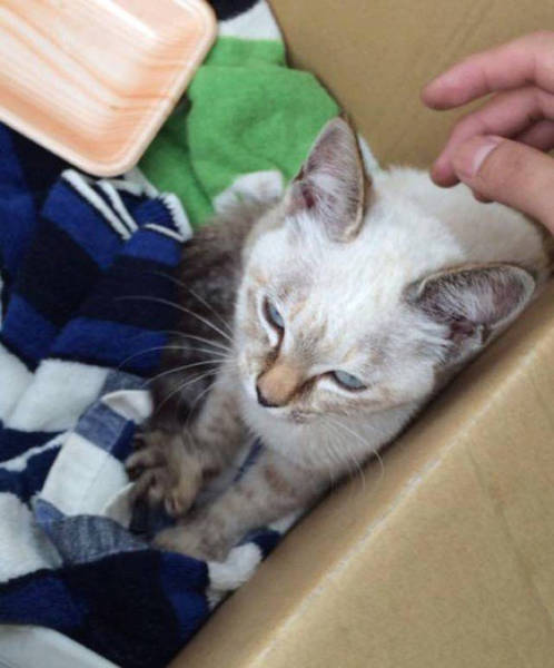 Thanks To Her Stubbornness This Kitten Found Herself A Home And A Loving Human