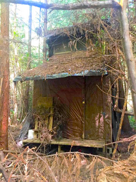 Well-Camouflaged Mysterious Cabin In The Woods