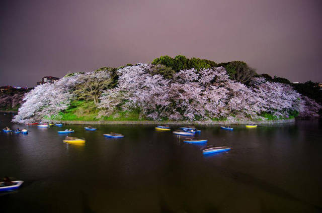 Magnificent Photos Of Cherry Blossom In Japan