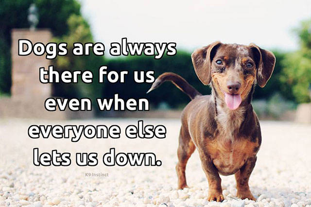 In Praise of All Awesome Dogs Everywhere