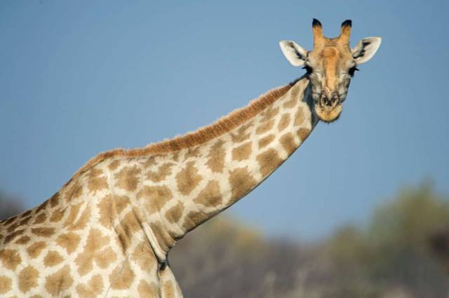 Some Weird Facts About Animals You Definitely Didn