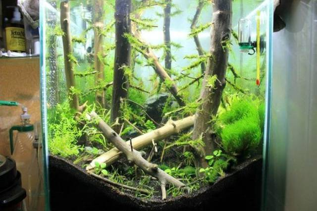 It Looks Like There Is An Underwater Forest In This Aquarium