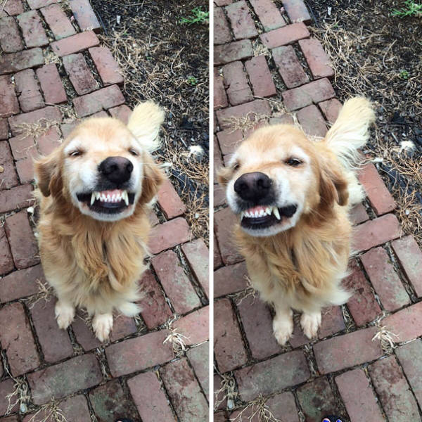 Cute Smiling Animals Is The Best Way To Jump Start Your Day