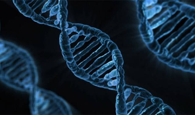 DNA Facts That Will Help Us  Understand The World Around Us