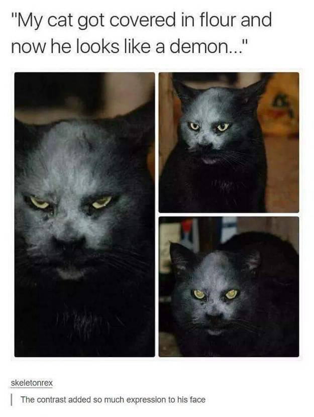 These Cat Pictures Will Always Be Funny