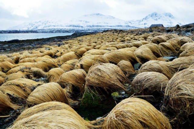 Breaking News: This Is Where Donald Trump Grows His Hair