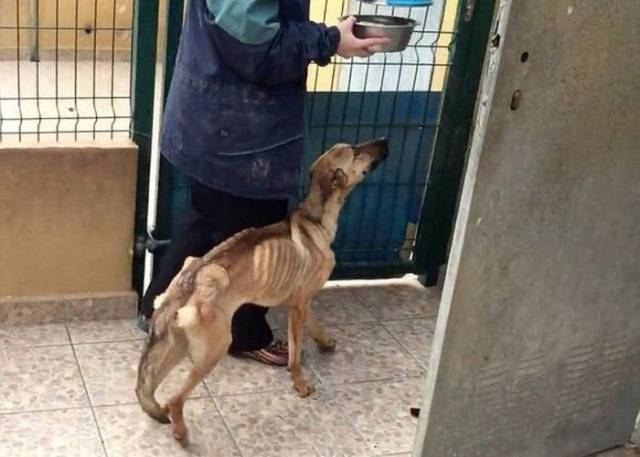 Amazing Recovery Of A Mistreated Dog That Was Nothing But Skin And Bones