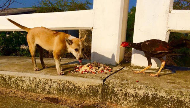 Man Feeds 80 Stray Dogs Each Day In Thailand